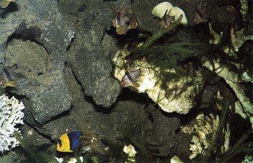 Decor Aquarium En Mousse Polyur Ef Bf Bdthane