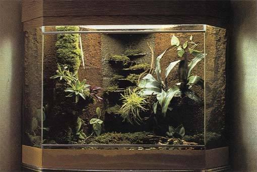 decoration terrarium